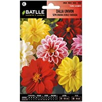 Semillas de Flores - Dalia Unwin semi enana doble variada - Batlle