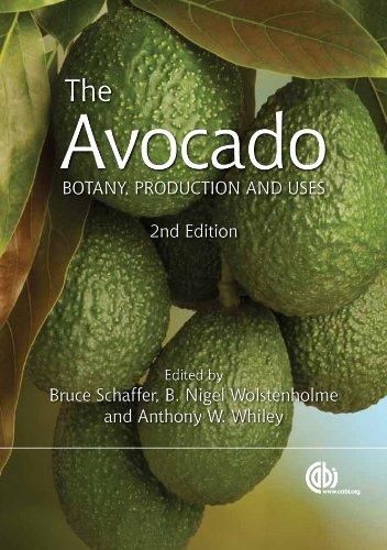 the-avocado-botany-production-and-uses