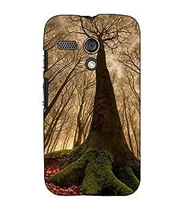 Fuson Designer Back Case Cover for Motorola Moto G :: Motorola Moto G (1st Gen) :: Motorola Moto G Dual (Natural Trees In Forest)