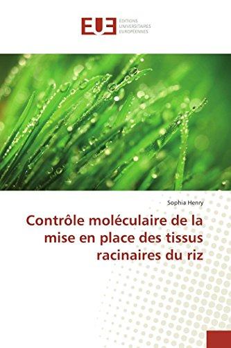 Contrôle moléculaire de la mise en place des tissus racinaires du riz