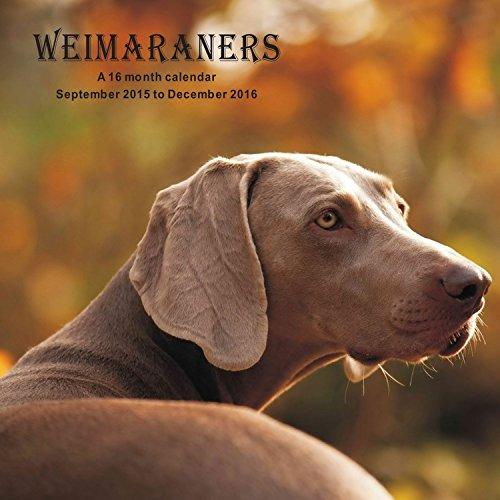 Weimaraners Calendrier Calendar 2016