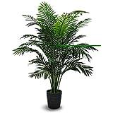 Poudha.Com Areca Palm Live Plant