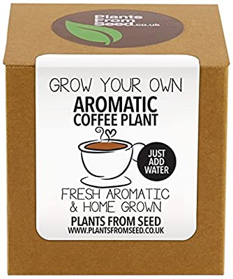 Plants From Seed Grow Your Own Coffee Plant Kit from Plants From Seed