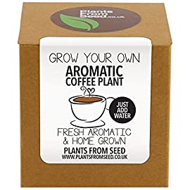 Plants From Seed  Grow Your Own Coffee Plant Kit
