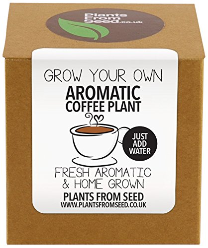 Plants From Seed  Grow Your Own Coffee Plant Kit 51DYN8TveyL