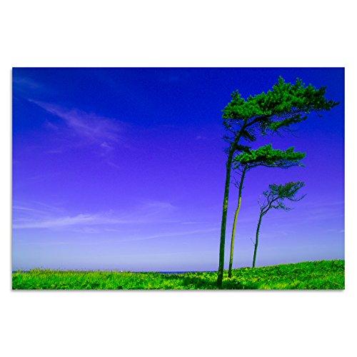 acrilico-de-cristal-de-cristal-para-la-pared-imagen-acrilico-marco-de-fotos-torsten-reuter-arbol-de-