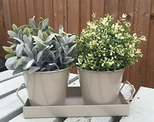 salvia-vintage-stile-shabby-chic-giardino-casa-vasi-in-metallo-vassoio