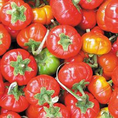 Goyo Kumba Eggplant, red delicious, good for Barbecue, 10 graines, NON GMO