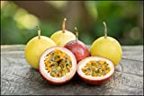 #10: Fruit Seeds : Mixed Colour Passion Fruit Seeds Fruit Seeds For Pot Plants Fruit Seeds Kitchen Garden Pack By Creative Farmer
