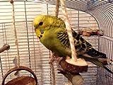 Tolles Vogelspielzeug aus Naturholz: DoppelSchaukel für Vögel, Natursitzstangen - 4