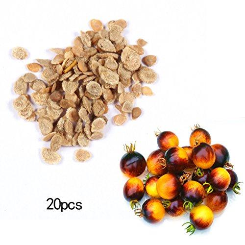 Swiftt Bunte Tomatensamen Organische Gemüse Bonsai Samen, sehr gut im Geschmack, Voller Ernährung Pflanzen Gemüse (20 Stück)