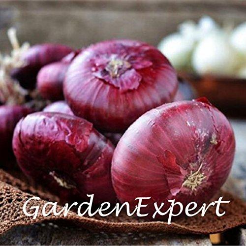 Graines d'oignon rouge 50pcs oignon légumes Graines Allium Cepa jardin Bonsai usine de bricolage Livraison gratuite