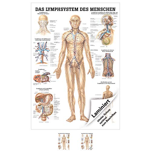 Lymphsystem Poster Anatomie 70x50 cm medizinische Lehrmittel -