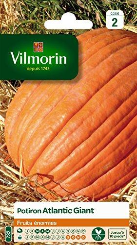 vilmorin-3860442-pack-de-graines-potiron-atlantic-giant-fruits-enormes