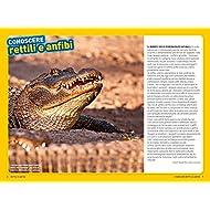 Rettili-e-anfibi-Cerca-lavventura-Divertiti-Ediz-a-colori