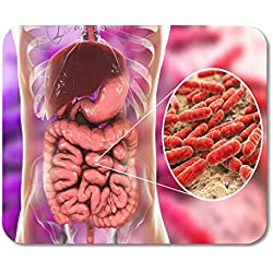 Tapis de Souris Gut Normal Flora of Small Intestinia Bactéries Lactobacillus 3D Tapis de Souris pour Ordinateurs de Bureau 25 x 30 cm
