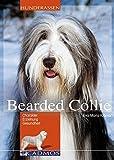 Bearded Collie: Charakter, Erziehung, Gesundheit