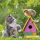 Tierfreundschaften 2020 - Animal Friendships - Wandkalender - Broschürenkalender (30 x 60 geöffnet) - Tierkalender - Wandplaner
