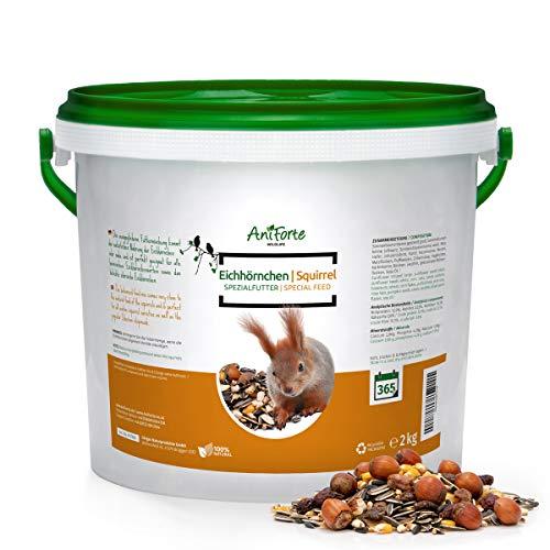 AniForte Wildlife Premium Eichhörnchenfutter 2 kg für Eichhörnchen und Streifenhörnchen - Naturprodukt Mischung, besondere und artgerechte Eichhörnchen Fütterung - Unsere Spezial Futtermischung (Ernährung Gesund Nuss-mix)