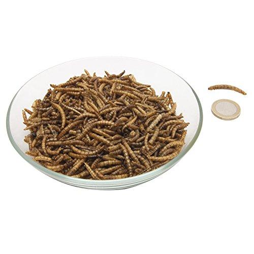 Ornigold Mehlwürmer - 2