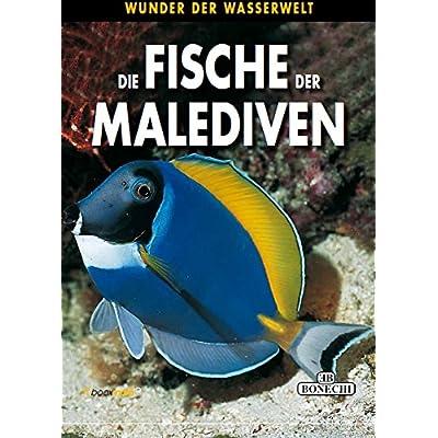 Fische Der Malediven Wunder Der Wasserwelt Pdf Download Woodrowelvis