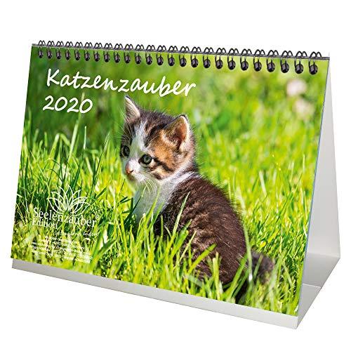 Katzenzauber DIN A5 Tischkalender 2020 Katzen und Katzenbabys - Seelenzauber (Tischkalender Katzen)