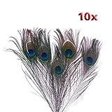 Pluma - SODIAL(R) 10pzs x Plumas de cola del pavo real natural - Color natural