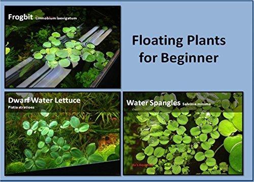 Aquarium schwimmende Pflanzen Paket, 12Südamerikanischer Froschbiss, 12Zwerg Wasser Salat, 12Wasser Plättchen aufpflanzend 12 Salat