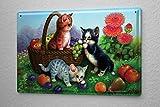 Blechschild Jürgen Scholz junge Katzen Obstkorb Äpfel Birnen Pflaumen Trauben Wiese 20x30 cm