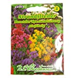 Staande lila Borntaler speciaal mengsel limonium sinuatum