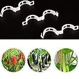ASHOP - Casa e cucina Pomodoro Clip Di Traliccio Garden Flower Vegetable Binder Twine Plant Support Chiaro