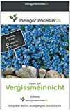mgc24® Vergissmeinnicht 'Blauer Ball' Myosotis sylvatica | Frühjahrsblüher | kompakter Wuchs