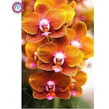 100 piezas de 20 colores rara orquídea Cymbidium, Cymbidiums semillas africanas, semillas de flor de Phalaenopsis bonsai, plantas en maceta para el jardín de 7