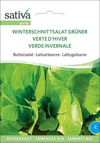 Buttersalat Winterschnittsalat Grüner | Bio-Salatsamen