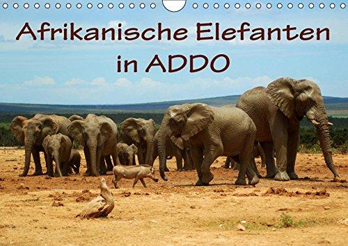 Addo Elephant National Park (Afrikanische Elefanten in ADDO (Wandkalender 2019 DIN A4 quer): Bilder aus dem ADDO Elephant National Park/Südafrika. (Monatskalender, 14 Seiten ) (CALVENDO Tiere))