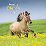 Pferde 2019 - Tierkalender, Broschürenkalender, Wandkalender, Pferdekalender  -  30 x 30 cm -