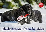Labrador Retriever - Freunde für´s Leben (Tischkalender 2019 DIN A5 quer): Labrador Retriever - die seit Jahren wohl beliebteste Hunderasse, auf 13 ... 14 Seiten (CALVENDO Tiere)