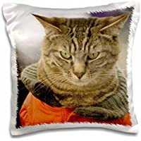 Cats - WA, Seattle, Pikes Place Public Market, Cat 16x16 inch Pillow Case