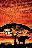 GB eye Poster Sonnenuntergang mit Elefant, 61x91,5cm, Größe: Maxi