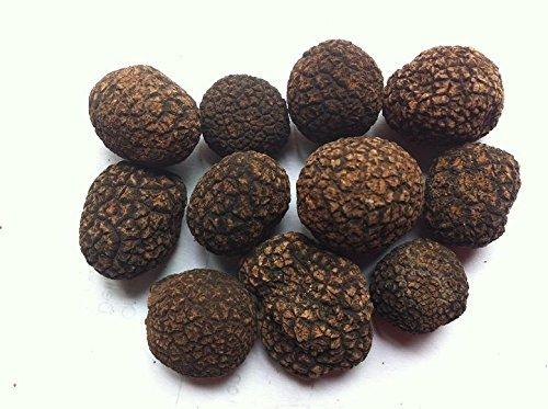 Himalaya famosa trufa negra entera secada en tarro de 1 libra (454 gramos)