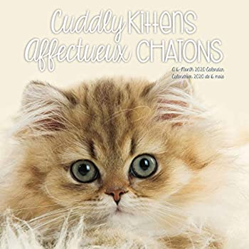 Cuddly Kittens 2020 Calendar / Affectueux Chatons