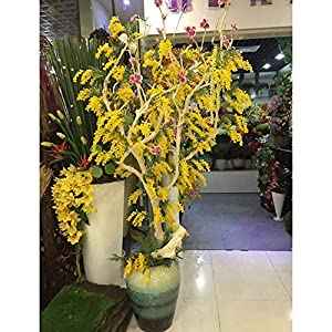 Artificial & Dried Flowers – Bundles Bouquet Plastic Gift Home Acacia Bean Branch Durable Fake Decorations Desktop…