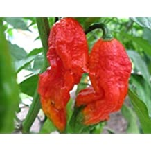 200 Red Semillas Naga Jolokia Naga Jolokia del fantasma pimienta de chiles calientes envío libre