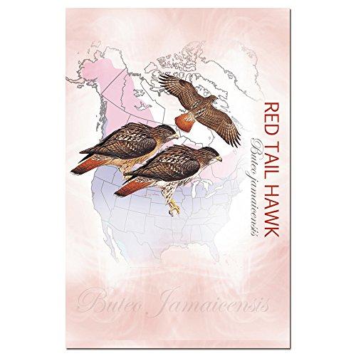 Baumfreie Grüße econotes blanko Note Karten, passende Briefumschläge, blanko Stationäre Card Set, 10,2x 15,2cm rot Schwanz Hawk, 12Stück (fs66576)