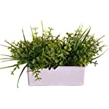 Pindia Artificial Green Flower Plant with Pot for Home and Office Decor (16.5x6.5x16, cms)