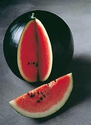 Melone - Wassermelone Sugar Baby - Zucker Baby - 25 Samen