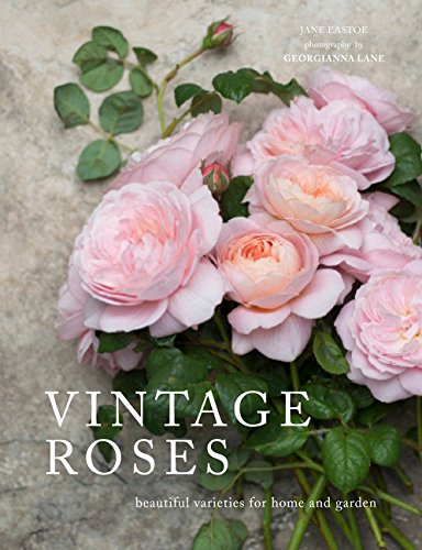 vintage-roses-beautiful-varieties-for-home-and-garden-beautiful-varieties-home-gardn