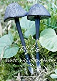Pilze (Tischkalender 2018 DIN A5 hoch): Pilze: Vom Frühling bis in den späten Herbst findet man sie in Wäldern,Mooren und auf