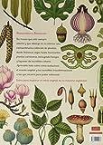 Image de Botanicum (El chico amarillo)