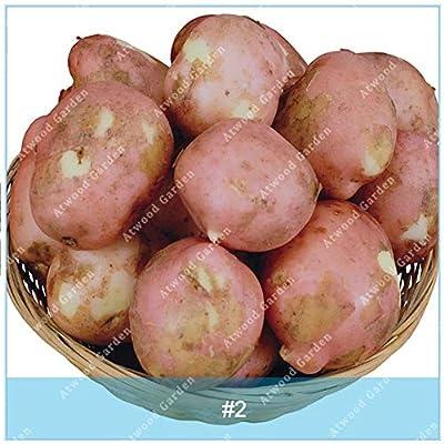 Shopmeeko SEEDS: ZLKING 100 Stück Mini Riesen Lila Kartoffel Anti-Falten Ernährung Grün Gemüse Für Hausgarten Pflanzkartoffel: 2
